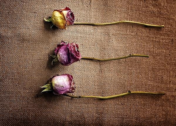 1-roses-on-hessian---113---a---print.jpg