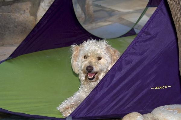 henry-s-tent.jpg