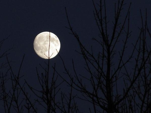 moon-behind-tree-web.jpg