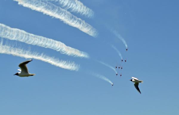 red-arrows-250-2-seagulls.jpg