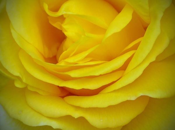 roses-at-mac-015-edit-vig.jpg