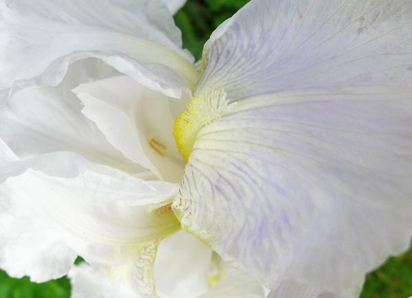 roses-at-mac-032-crop.jpg