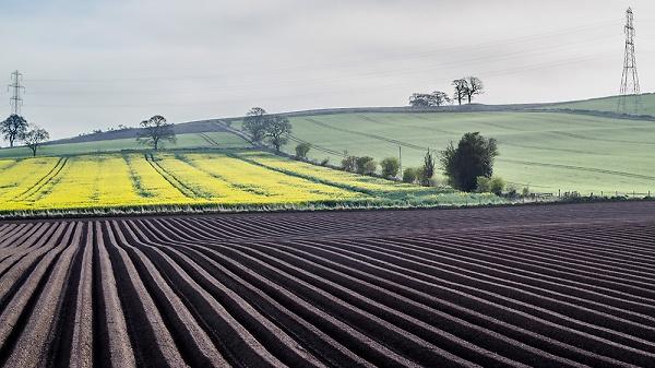 ploughedfield5.jpg