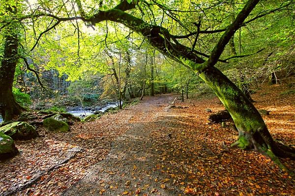 1-longtimber-woods-2.jpg