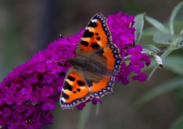 the-butterfly.jpg