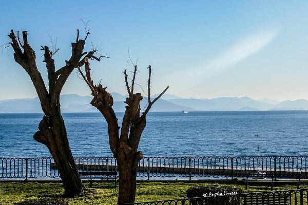 trees-garitsa-copyrights.jpg