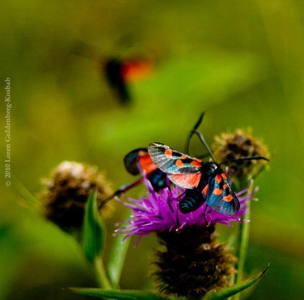red-butterfly2.jpg
