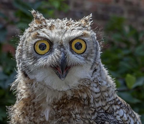 1-owl-in-york-churchyard.jpg