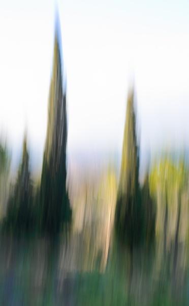 -dsc1728-cypress-trees-ii.jpg