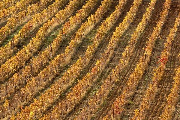 11367-vines-abstract.jpg