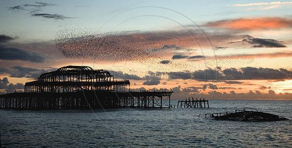 starling-roost-over-west-pier-brighton.jpg