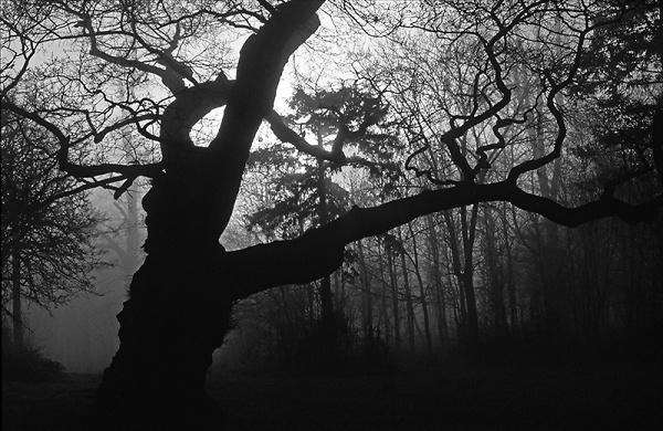 trees-in-mist.jpg