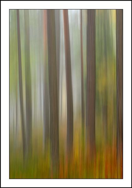 treeblurfin1.jpg