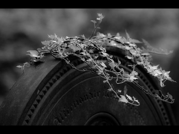 2-05-mw-black-and-white.jpg