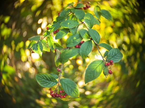 berries-9041086.jpg