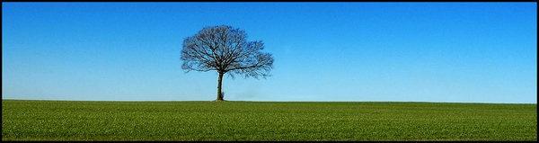 single-tree.jpg