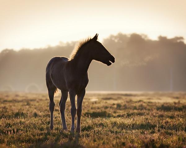 2-foal-contre-jour3.jpg