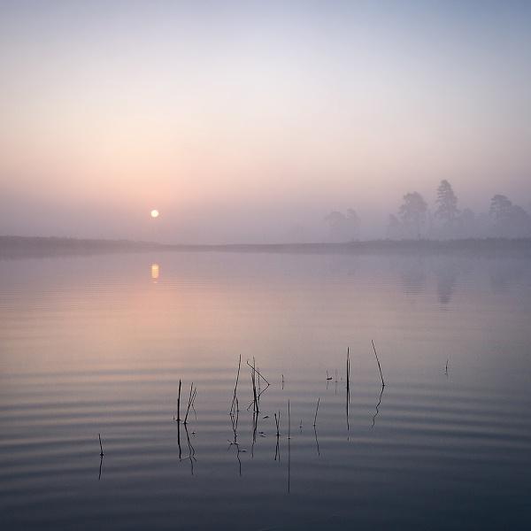 3-milkham-pond---mist-and-ripples2.jpg