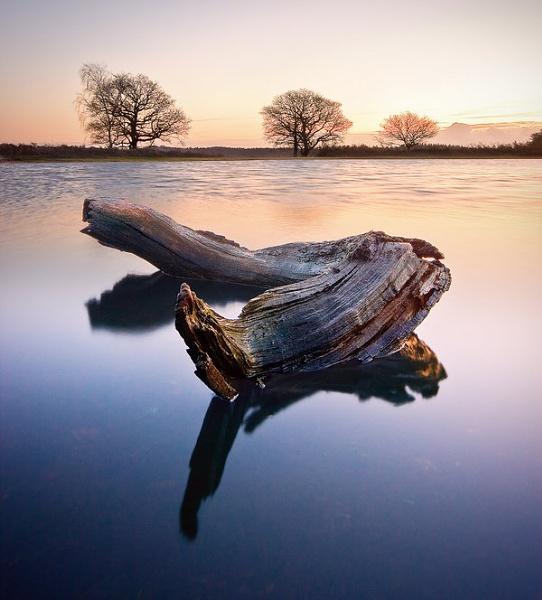 bratley-pond-log4-fg-interest.jpg