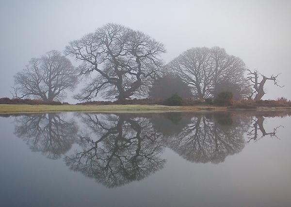 bratley-view-pond-reflections4.jpg