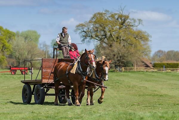 hhhshow-2-heavy-horses-pulling-a-cart.jpg