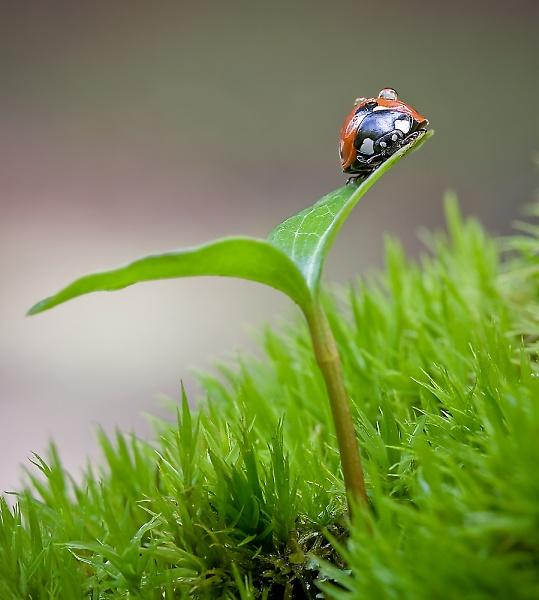 ladybird-hiding-2.jpg