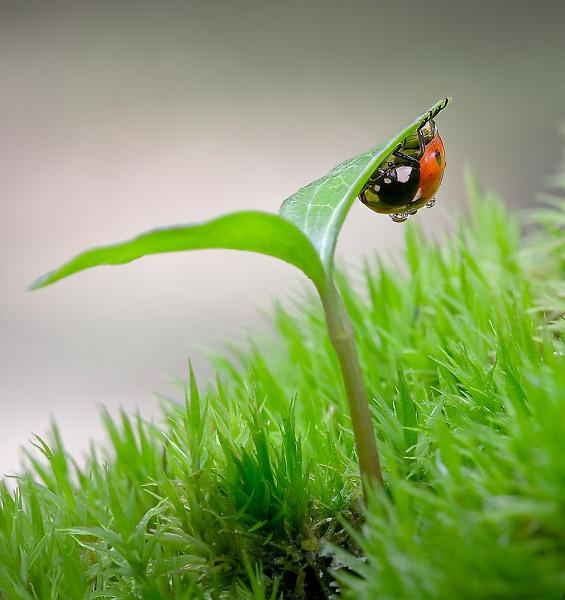 ladybird-hiding.jpg
