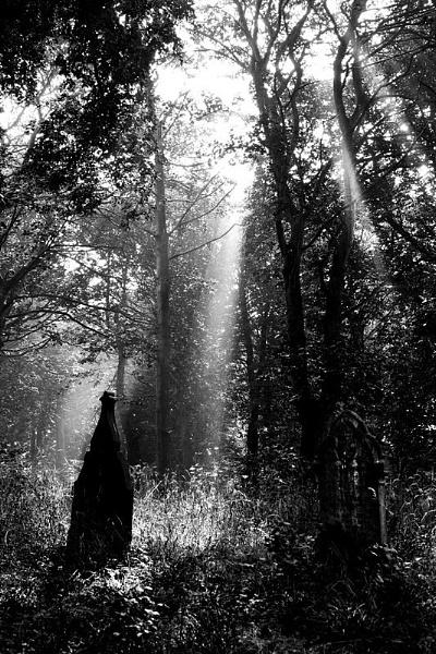 graveyard1-epz.jpg