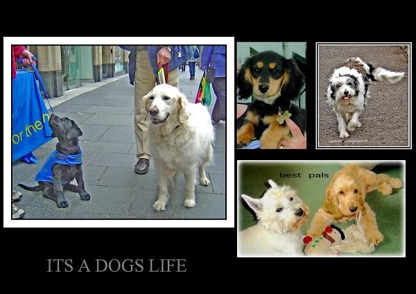 dogs-lifeeeeeeeeeeeeeeeeeeeeeeeeeeeeeeeeeeeeeeeeeeeeeeeeeeeeeeeeeeee.jpg
