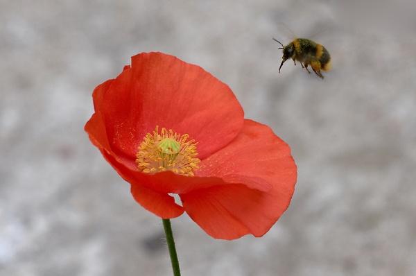 2-back-garden-flowers-21-079.jpg