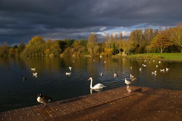 7-cosmeston-lakes-6-11-2010-5.jpg