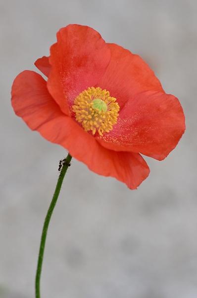 back-garden-flowers-21-077.jpg