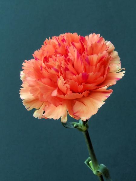 flowers-11-02-08--4.jpg