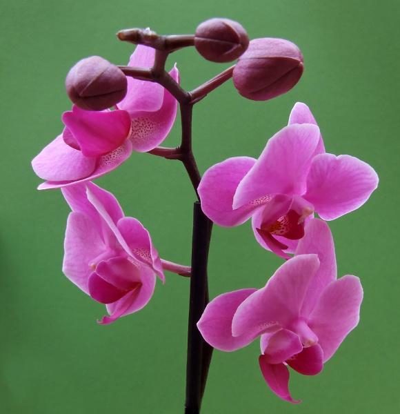 orchids-26-05-073.jpg