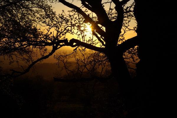 treeshine.jpg