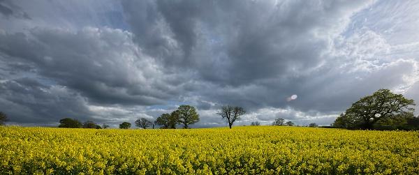 rape-fields--derbyshire.jpg
