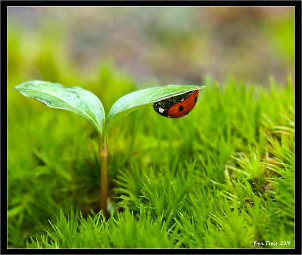 ladybird-dsc7409-edit.jpg