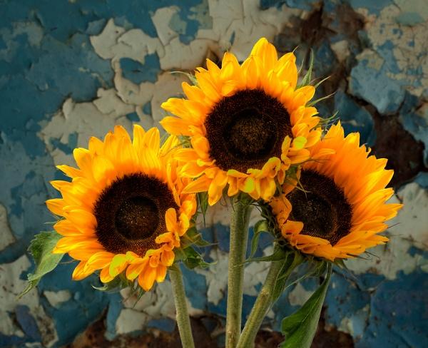 1-sunflowers.jpg