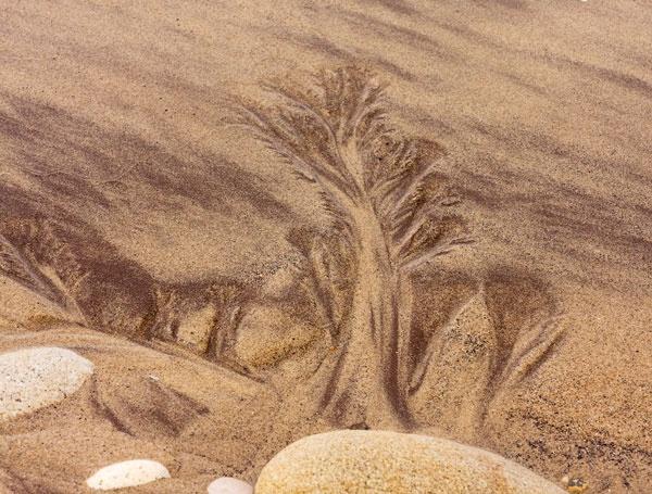sand-treescape-s.jpg