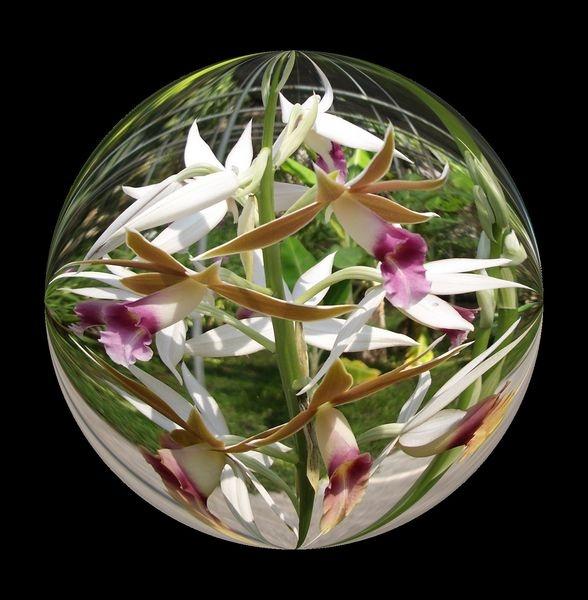 tn-orchid-sphere-3.jpg