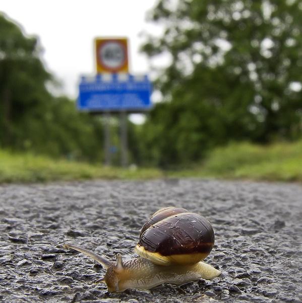 snaila.jpg
