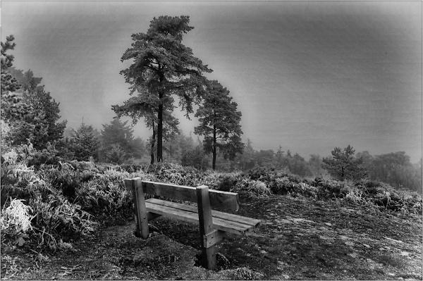 2-woods-frost-4093.jpg