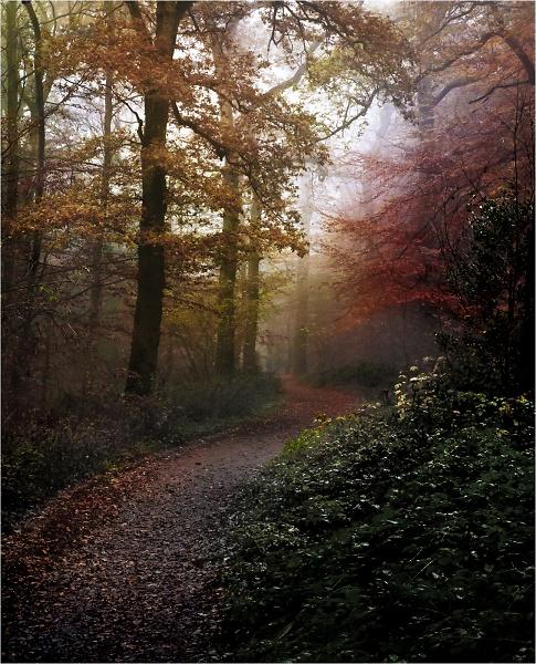 3-woods-9525.jpg