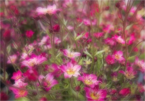 tiny-flowers-2029.jpg
