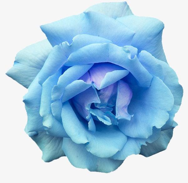 1-blue-rose.jpg