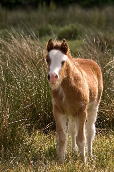 1-foal-1a-200511.jpg