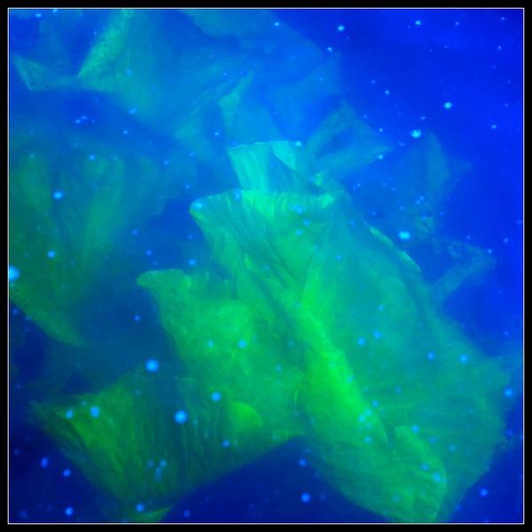 underwater-frond-190511.jpg