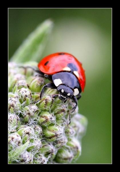 1-ladybird1-img-6388.jpg